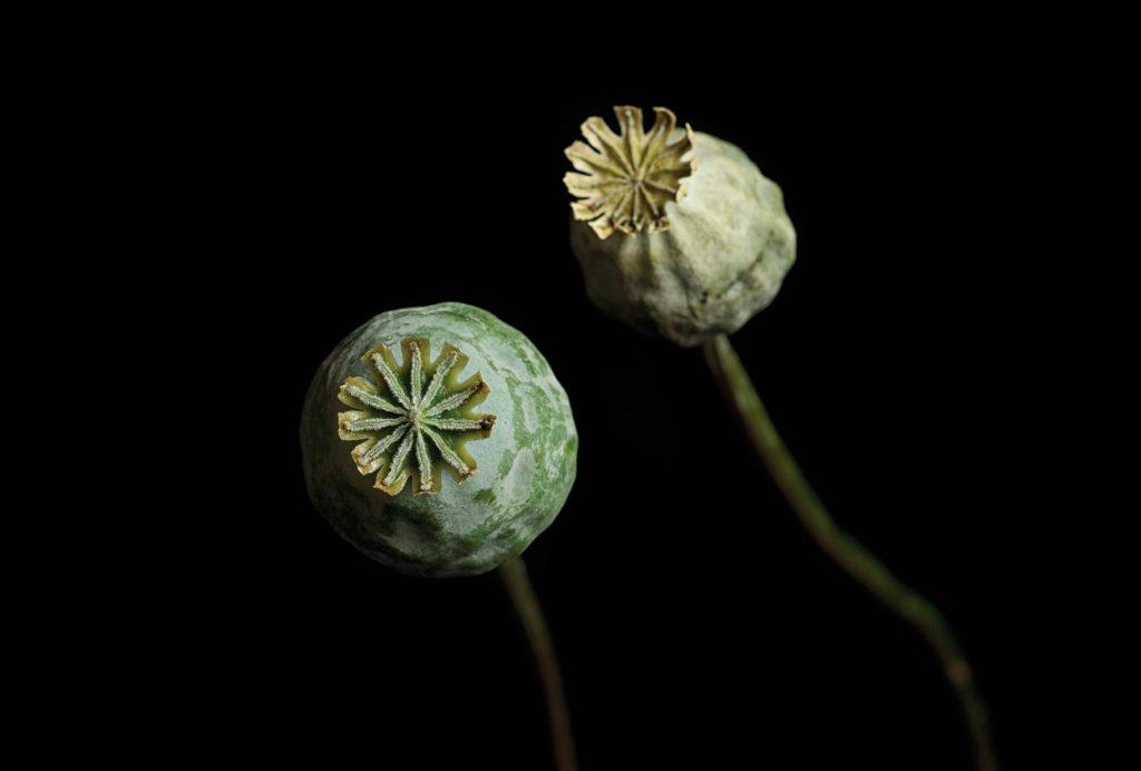 Einzelausstellung Sprache der Blumen Berit Neß: Selam, 2013